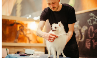Photo of 5 Top Essentials Grooming Tools for Dogs In 2021